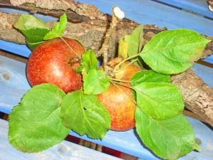 Apfel 3 Okt 08